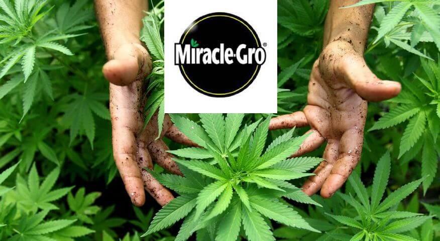 大麻関連企業
