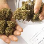大麻(マリファナ)ってどんな種類があるの?サティバ?インディカ?なにそれ?