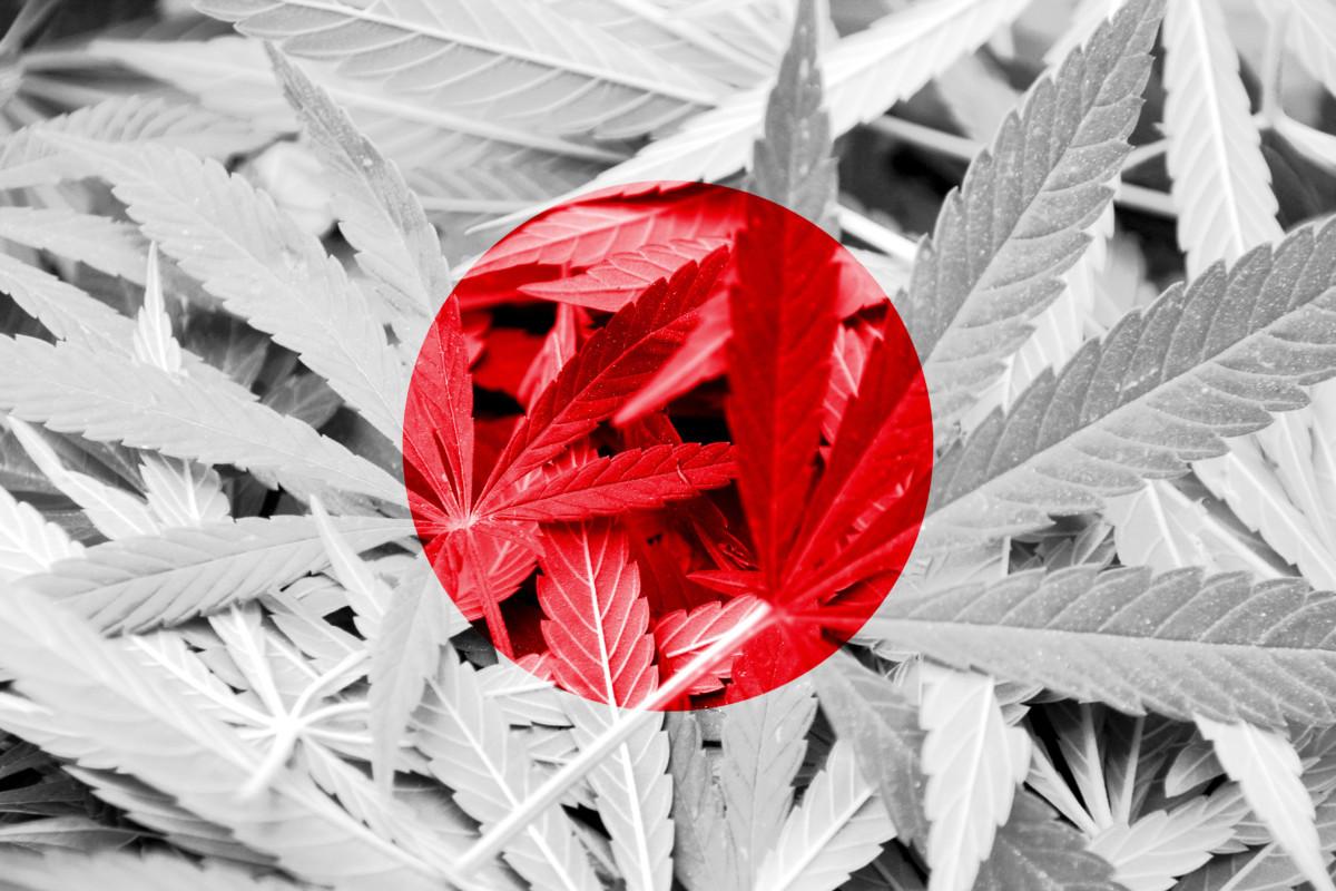 日本国旗✖️大麻草