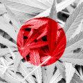 日本人が今、大麻産業を真剣に考えるべき理由