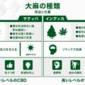 大麻ってどんな種類があるの?【サティバ、インディカ、ハイブリット】