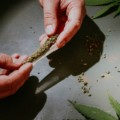 【大麻の致死量】大麻ってどのくらい吸ったら死ぬの?