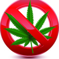 最新版「大麻取締法の全て」日本で大麻が禁止になった本当の理由から罰則まで徹底解説!