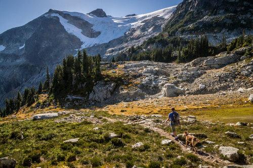 ハイキングをする男性と犬