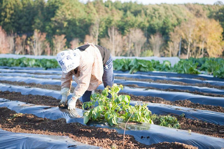 農業をするおばあさん