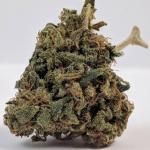 パームツリーCBD| Palm Tree CBD【大麻品種図鑑】
