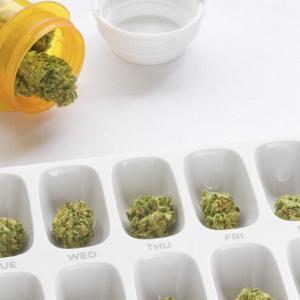大麻のマイクロドージング