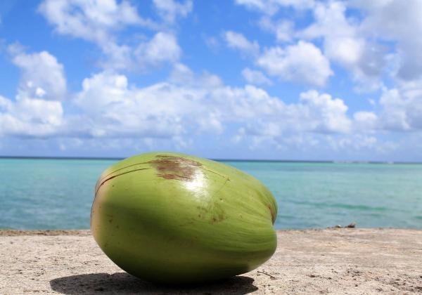 グアム島のココナッツ