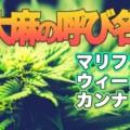 【大麻の言い方って何種類あるの?】「ヘンプ」「マリファナ」「カンナビス」それぞれの違いと意味は何か?