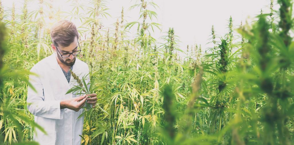 大麻と科学者