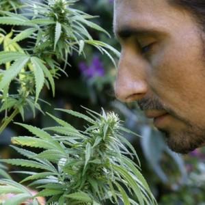 大麻の香りを嗅ぐ男性
