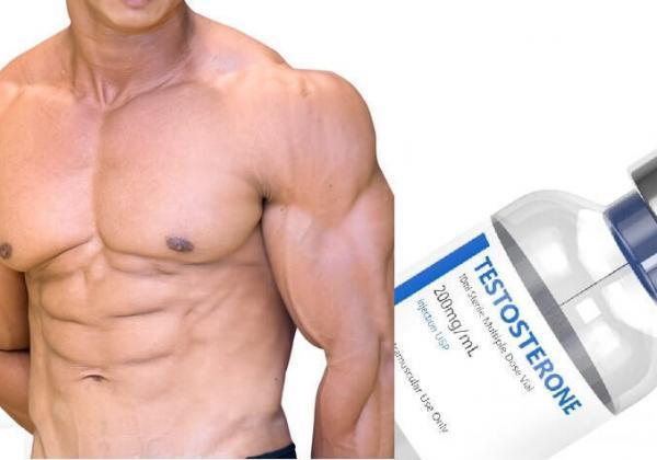 筋肉とテストステロン