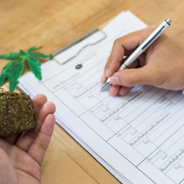 大麻 調査