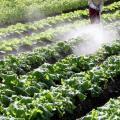 日本の「食の安全」が崩壊の危機、安倍政権が農業と牛肉をアメリカに売り渡す関税密約を交わしたか!?