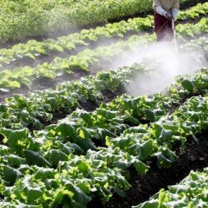 農薬を散布する写真