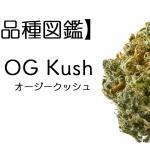 オージークッシュ|OG KUSH【大麻品種図鑑】