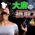 【大麻の摂取方法4選】大麻ってどうやって吸うの?