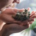 「多くの人が大麻の匂いを嫌っている」という調査結果