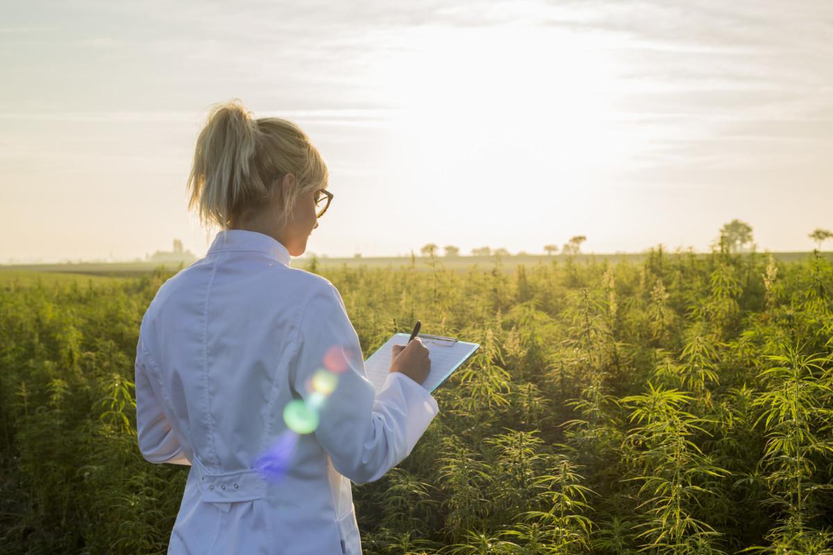 大麻の調査をする女性