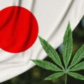 【医療大麻の合法化】が医療費の大幅な削減に繋がり、日本の国民皆保険制度の危機を救う可能性
