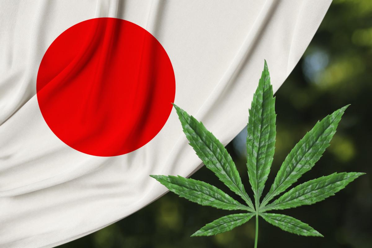 日本国旗と大麻草