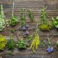 【2020年最新版】大麻との併用に最適な6種類のハーブと効果効能