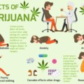 大麻は脳と体にどんな作用があるの?安全性・危険性は?大麻が身体とメンタルヘルスに与える影響
