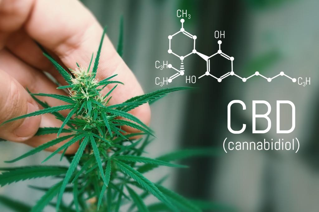 大麻草とCBD