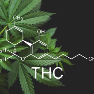 大麻草とTHC