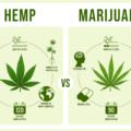 「大麻」と「麻(ヘンプ)」の違いを解説!成分・用途・法律の違いをチェック!