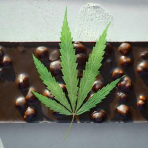 大麻とCBDチョコレート