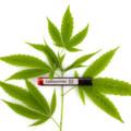 新たな研究により、大麻に含まれるカンナビノイド「CBD」が新型コロナウイルスの治療薬となる可能性