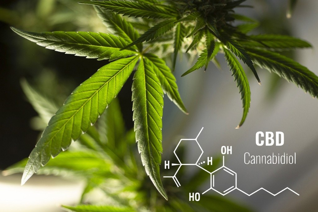 CBDと大麻草