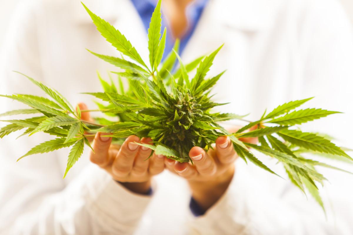 大麻を持つ医者