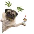 【犬・ペット用CBD3選】ペット用CBDオイルの安全性や副作用などを解説