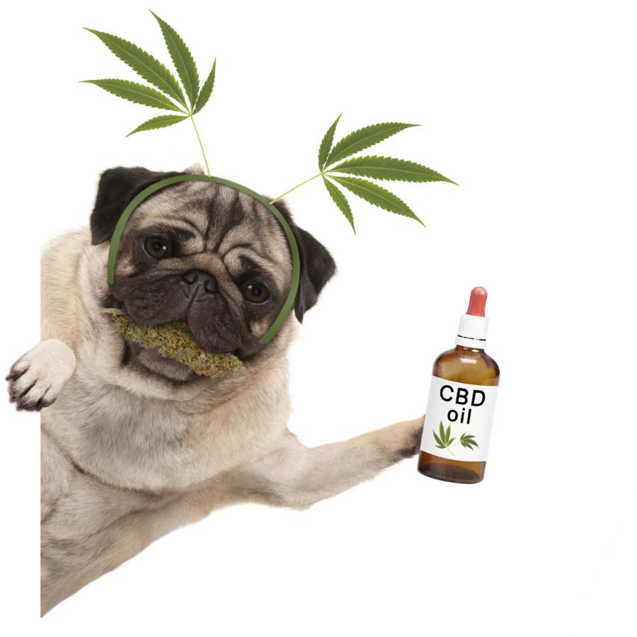 CBDオイルと犬