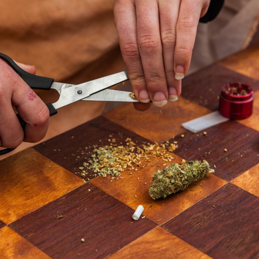 はさみで大麻を砕く男性