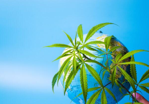 大麻と地球儀