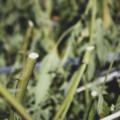 厚生労働省がCBDの部位規制撤廃の方針を示す!茎・種子以外から抽出されたCBDが利用可能になる?