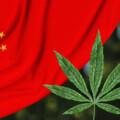 人類初の大麻栽培は12,000年前の中国だったことが明らかになる