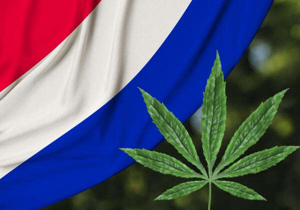 オランダ国旗と大麻草
